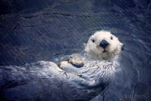 梦想那片海 温哥华水族馆