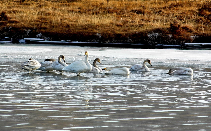 动物过冬场景图片