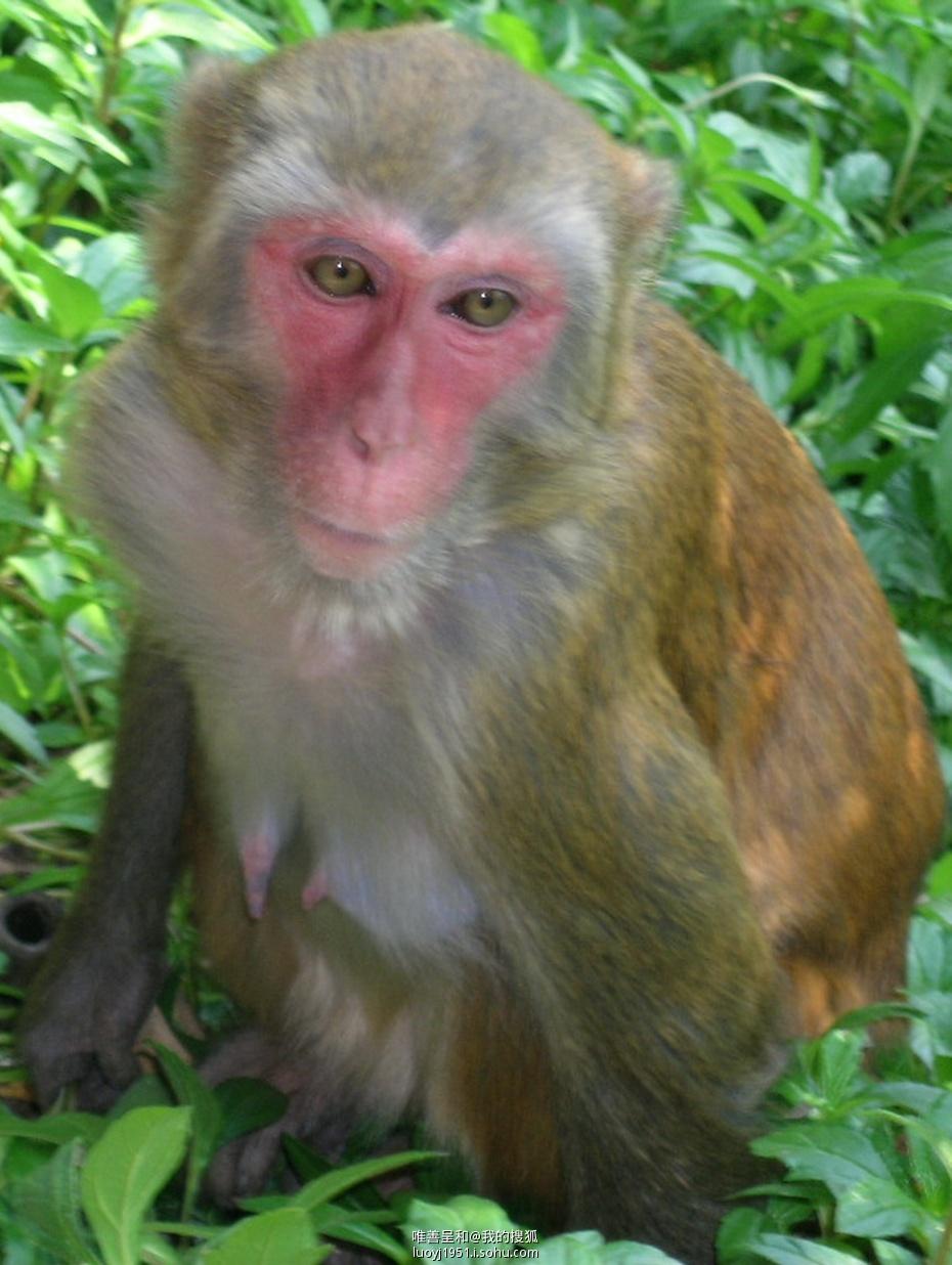 观望的意思_【搜狐老年村】【动物趣闻】猴哥们的幸福生活-真水无香-搜狐博客