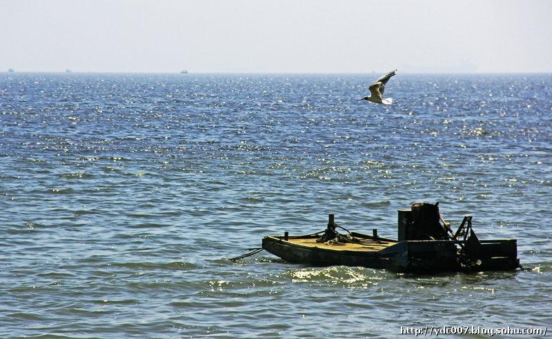 沿这条大道从鸽子窝到秦皇岛海边修了一条观景栈道,人们可以一路欣赏