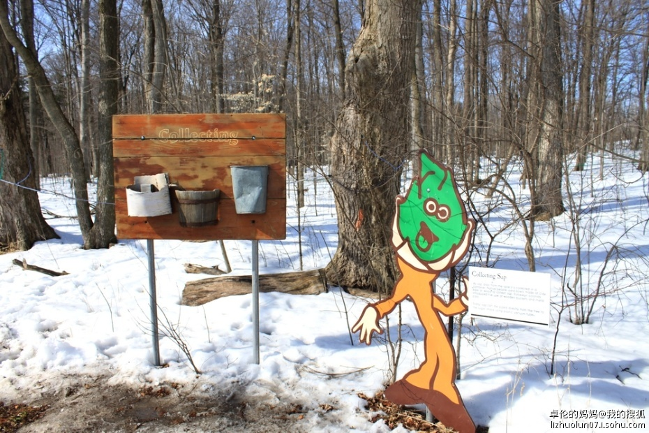 采集树液的工具