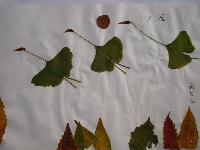 树叶粘贴图片-惠子-搜狐博客
