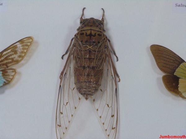 一个景泰蓝蝈蝈笼-上海野生昆虫馆