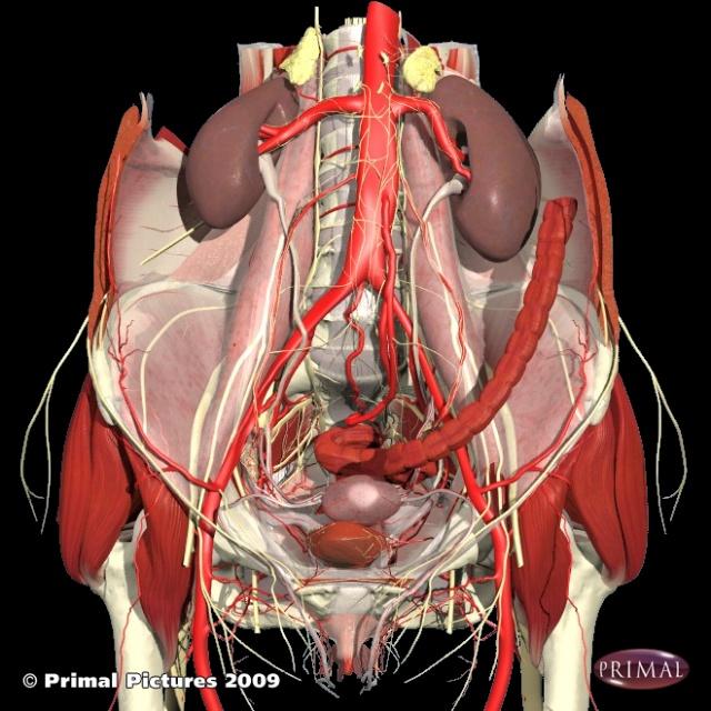 人体结构图---胆小的别看