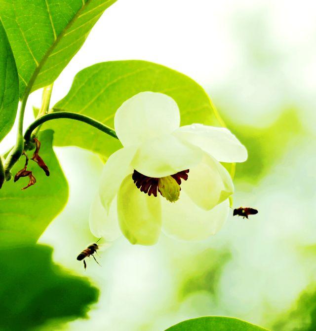 每年六月前后开花,曾经多次徒步去寻不曾见