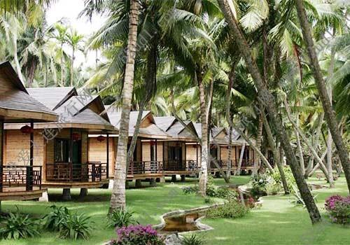 东郊椰林风景区里有国内最大面积的一片椰子林