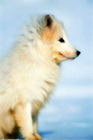 诗歌 拥着夜色入睡的白狐狸