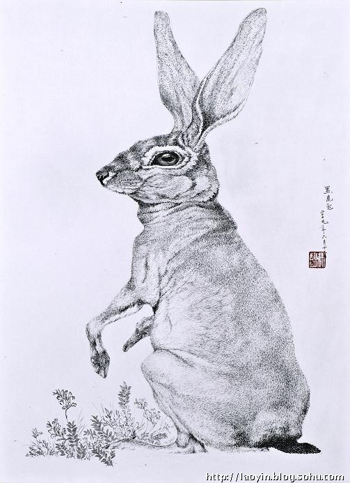 钢笔画---可爱的小兔子-老尹-我的搜狐