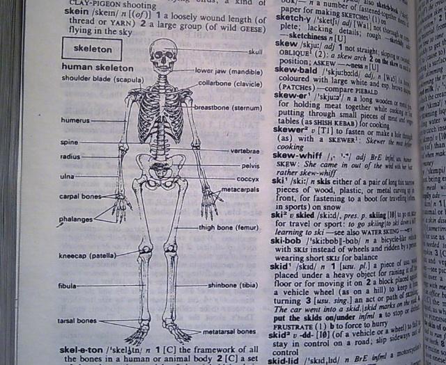 人是高级动物,其思想、情感和行为是极其复杂的,可是人体的生理结构就没有那么复杂。你比方说人有多少块骨头,只要一个数字就能回答。学习医学知识,就好像看一本百科全书,内容很多,却没有什么道理,不用演算、推理、判断,只需要记忆。医学知识里边解剖学最简单,解剖学里边骨骼和运动系统最简单,用十几个学时就可以掌握。 人有多少块骨头,一个数字就回答了。把一块脊椎骨拿在手中观看,几个解剖学位置很容易辨明。人有多少块骨头?男性和女性的骨头是否一样多?讲解剖的老师往往会提出这样的问题。还用问吗,教材上写得清清楚楚。在三十五