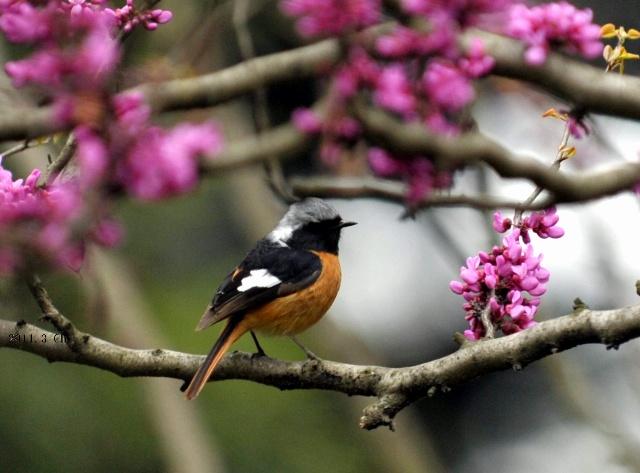 春天的诗配画内容春天的诗配画版面设计