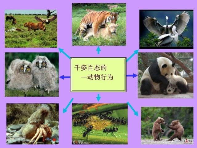 八上17.1动物的行为