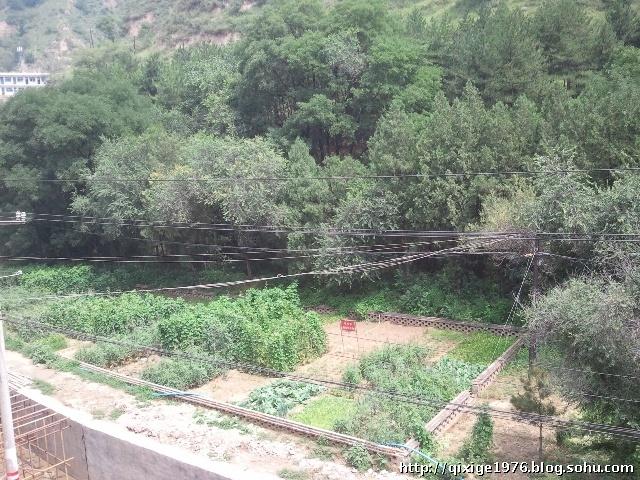 ...杨家岭,看到了毛主席当年曾经种过的菜地.   杨家岭的早晨,一...